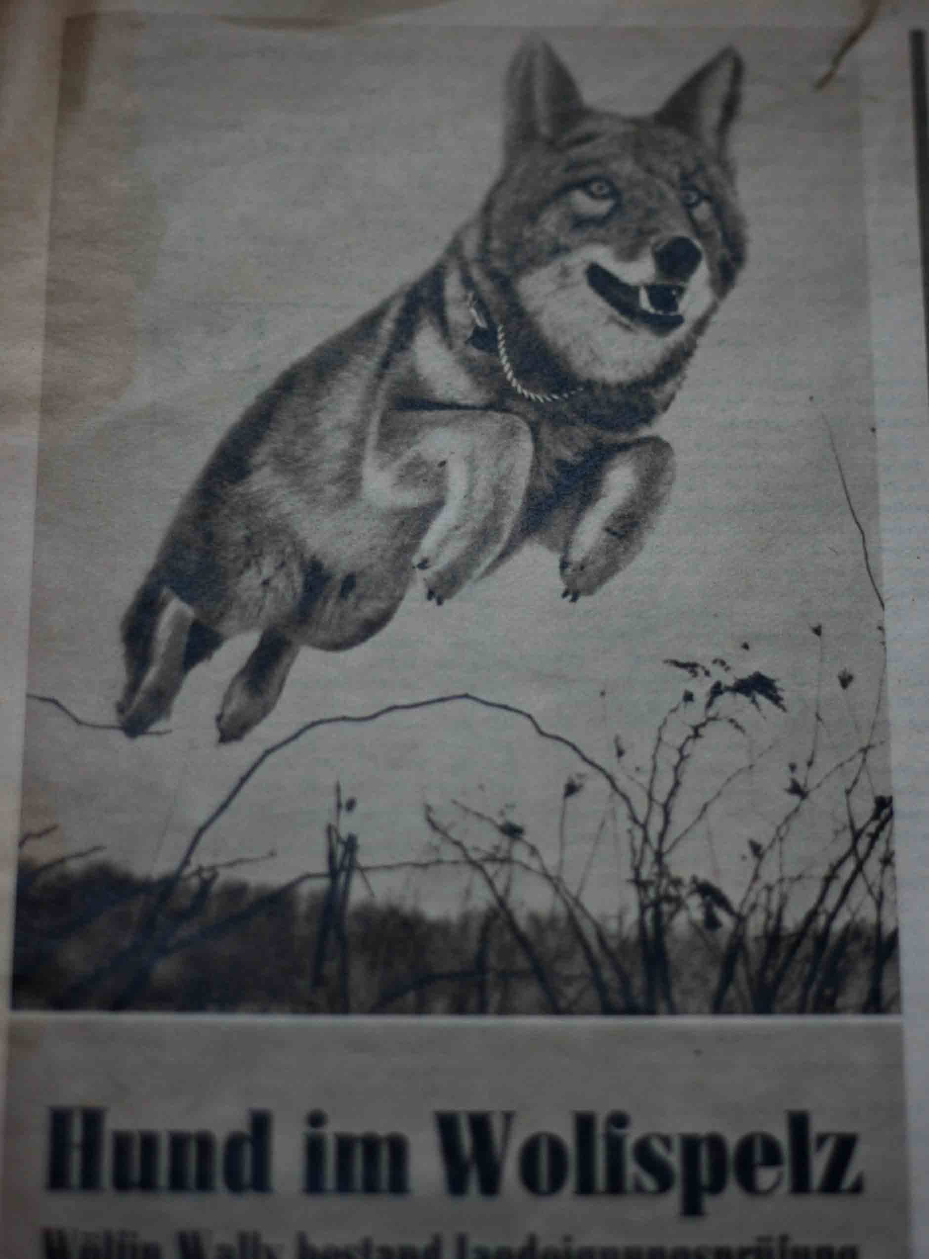 fuchswolf