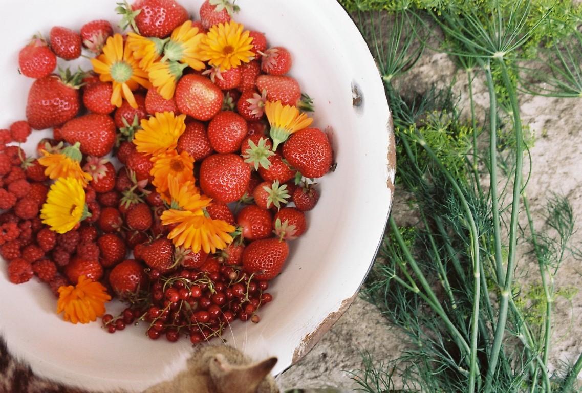 Erdbeeren Johannisbeeren Himbeeren Ringelblumen Dill
