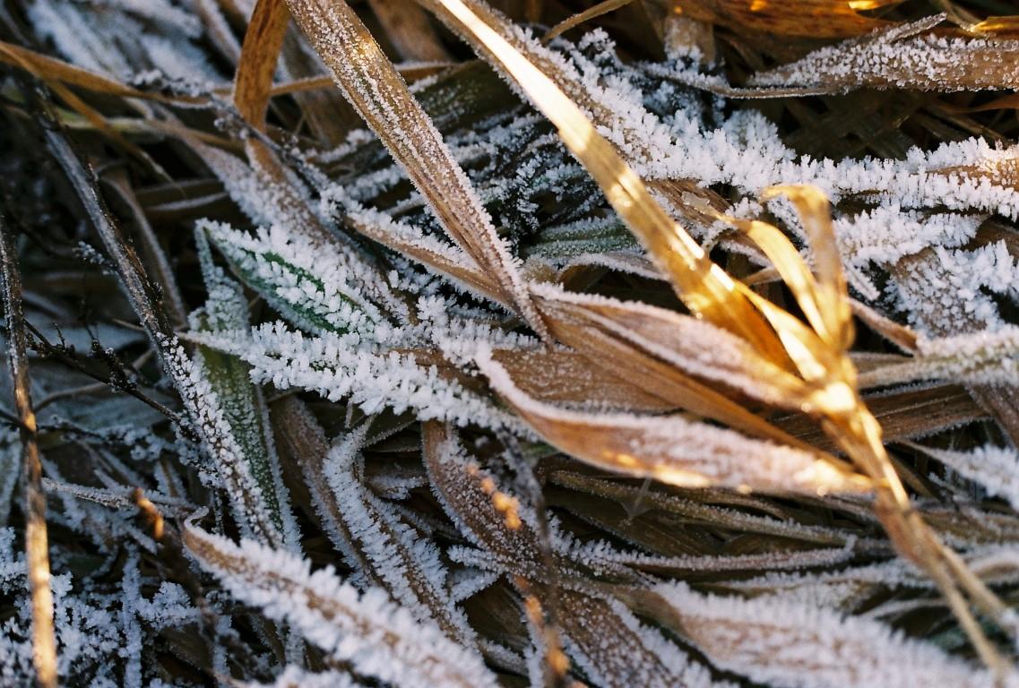jan-1-winterspaziergang