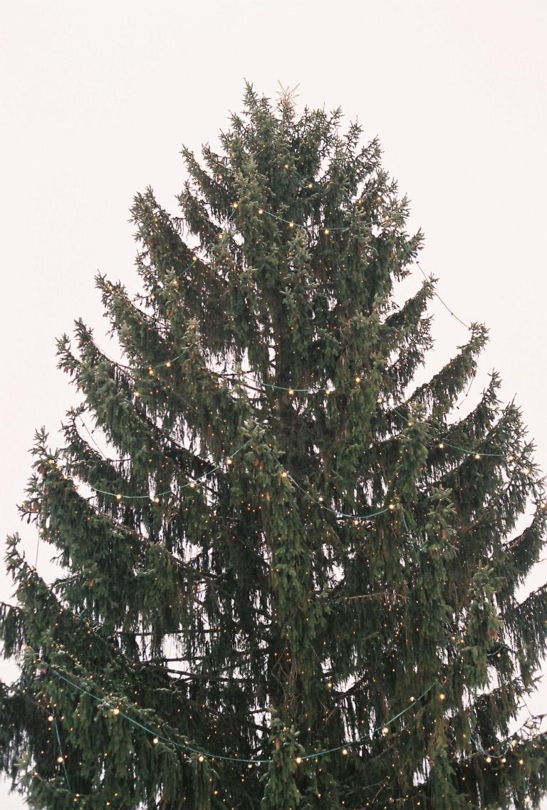 jan-2-weihnachtsbaum-strietzelmarkt