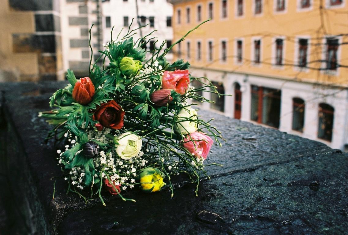 Feb 24 Blumen Ranunkeln Anemonen