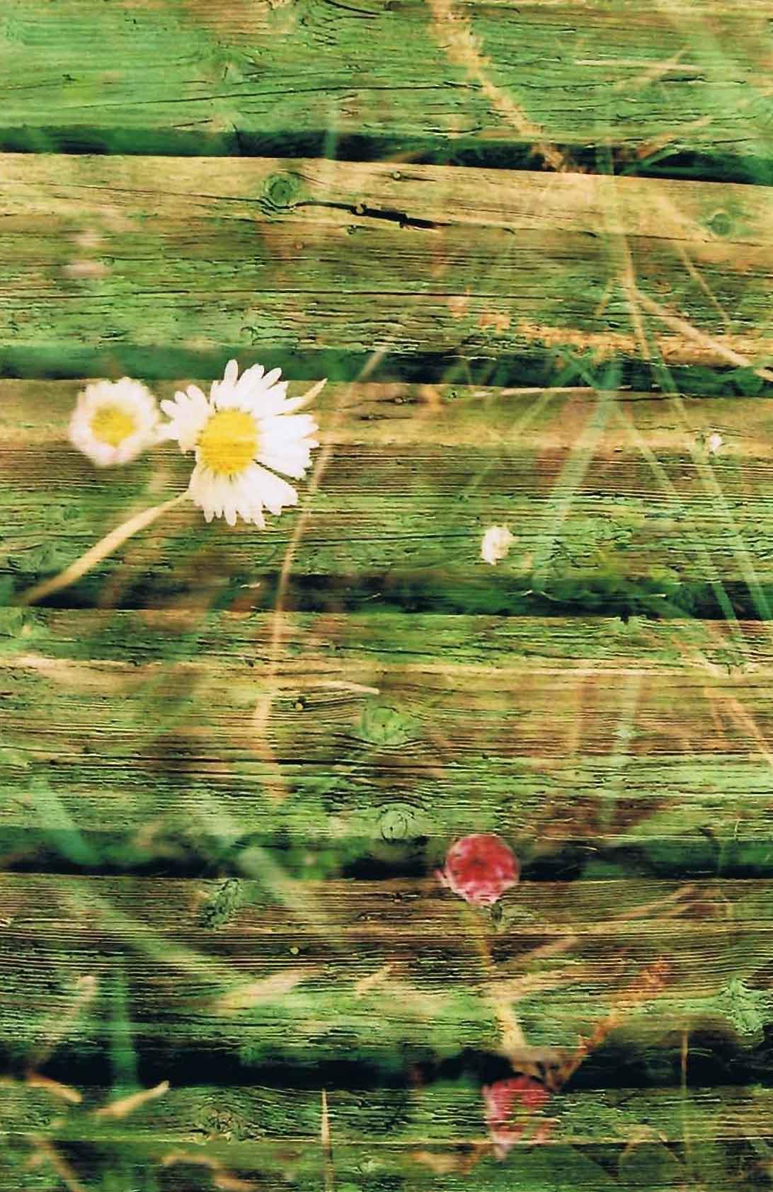 20 doppelbelichtung Gaensebluemchen