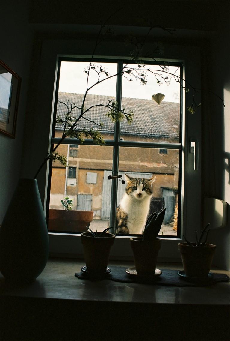 8 Fenster zum Hof Ivan Kodak Ektar