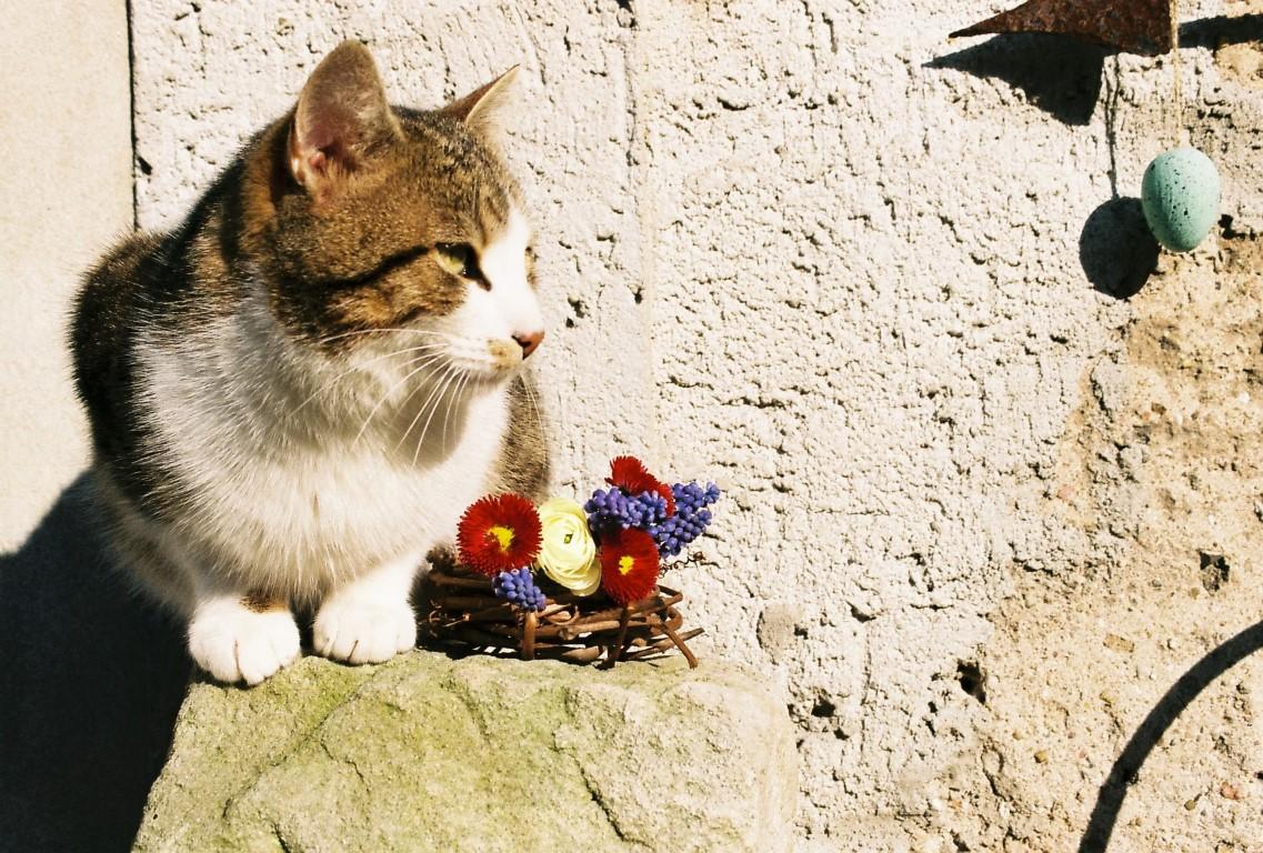 19b Ivan und die Blumen