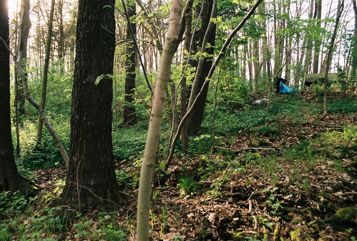 24a Muell im Wald