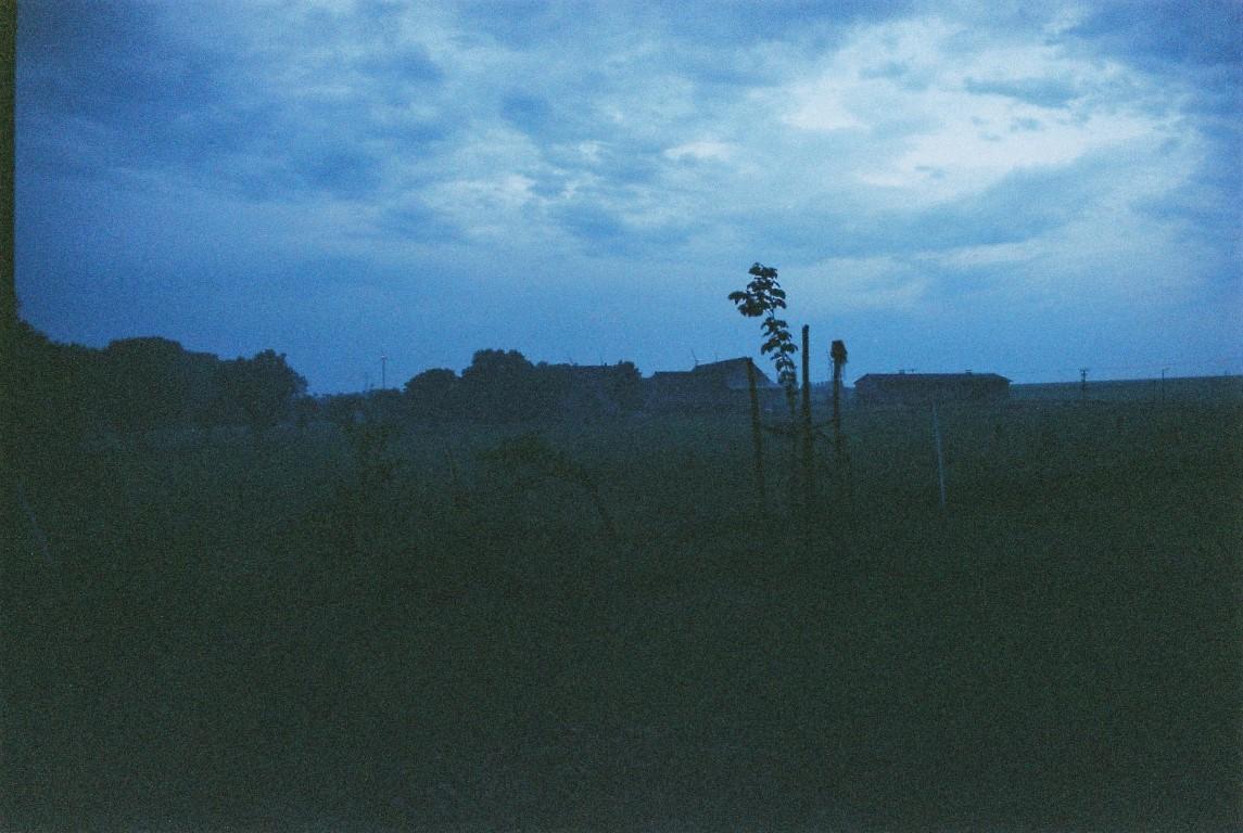 abends im Garten film photography