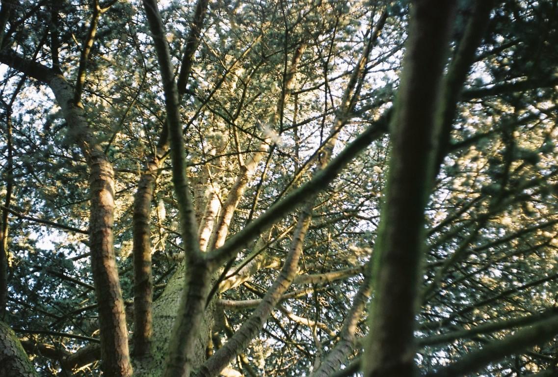 der Kletterbaum film photography