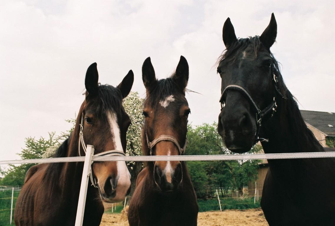die drei von der Pferdekoppel film photography