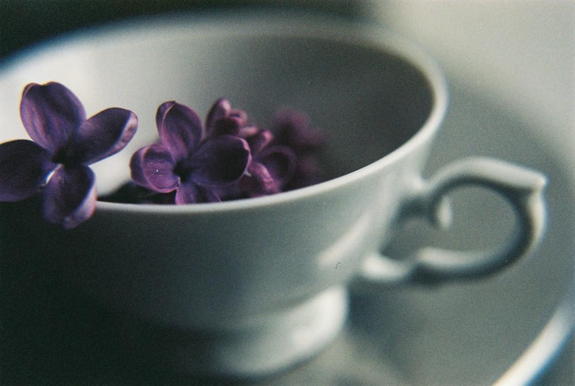Makro Fliederblueten film photography