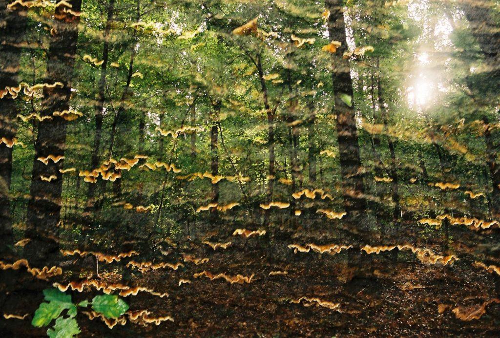 Wald Doppelbelichtung