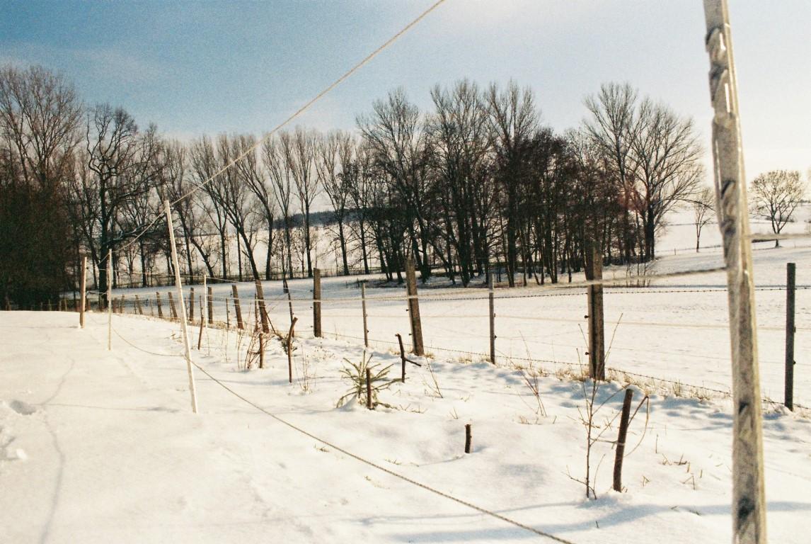 2019 Baumstreifen im Schnee (Medium)