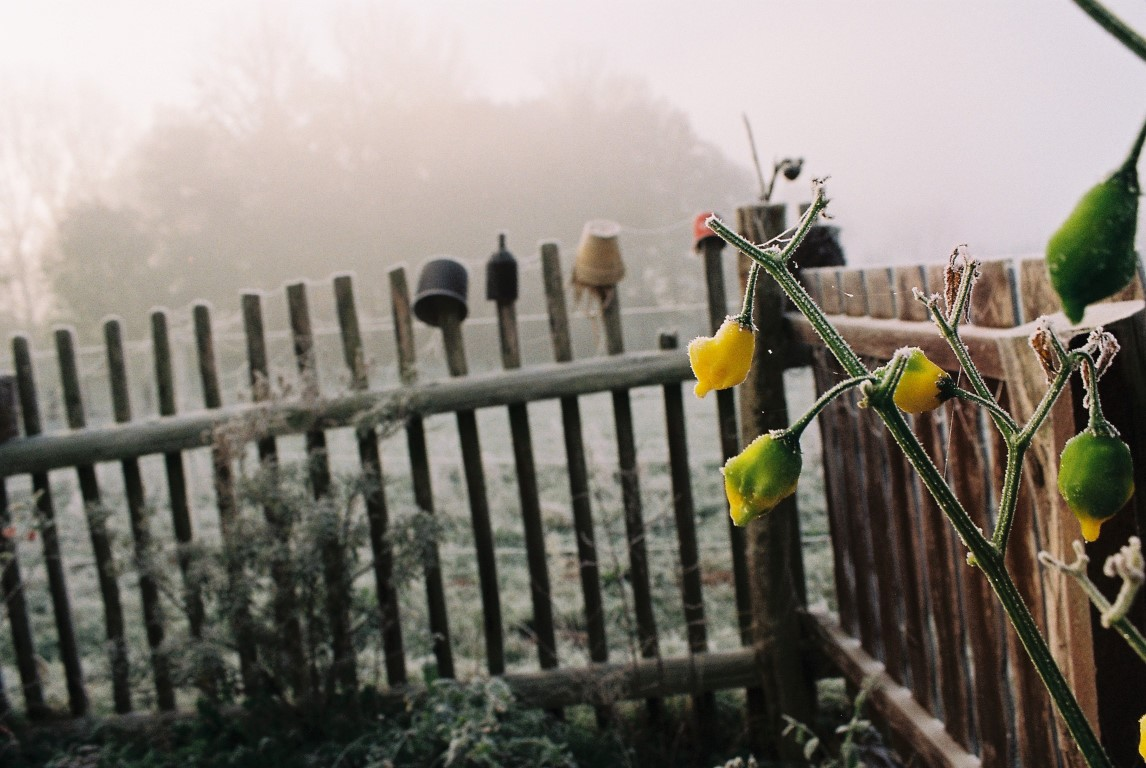 2019 Garten Frost 4