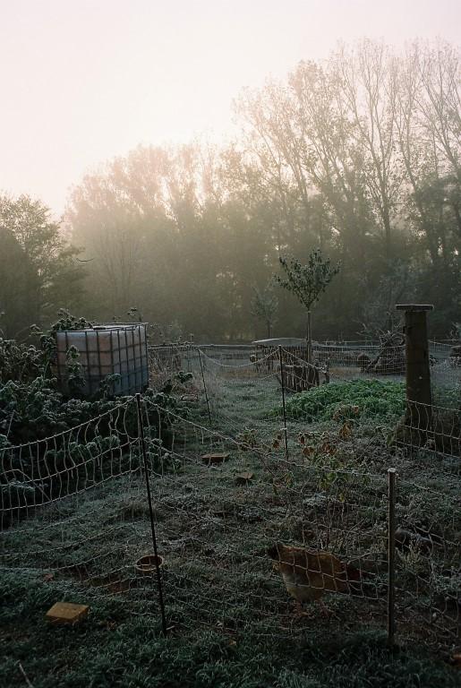 2019 Garten Frost_1