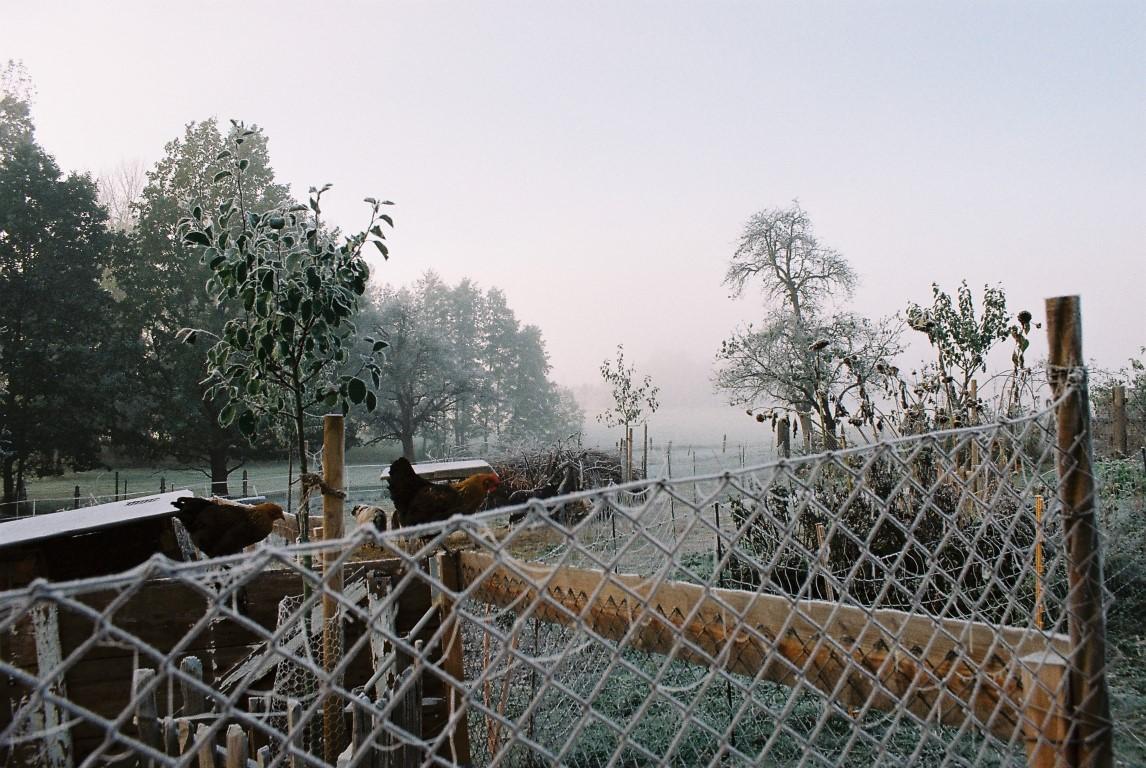 2019 Garten Frost_2