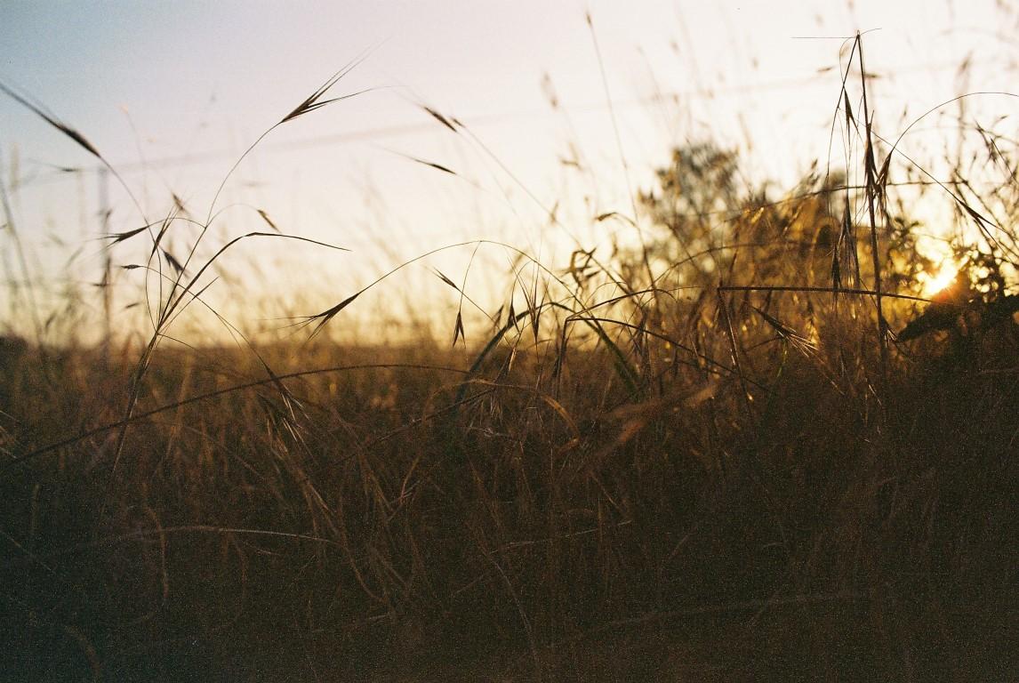 2019 Getreide Wiese Feld (Medium)