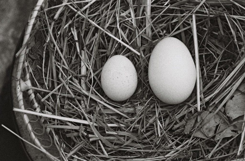 Eier, Sommer