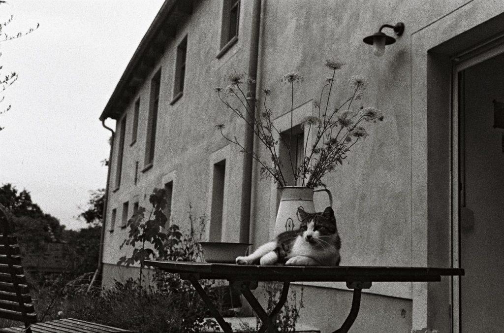 Haus Katze