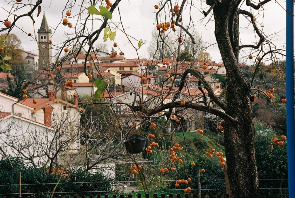 Kakibaum Herbst