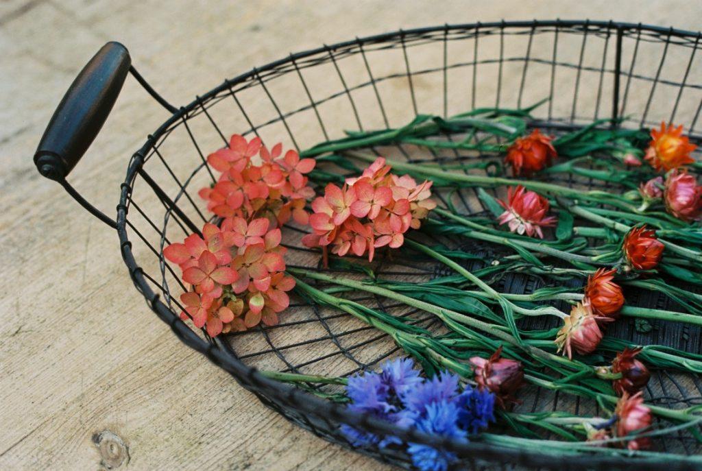 Trockenblumen bluete