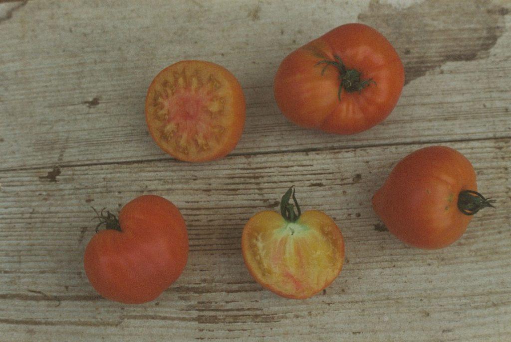 Tomate Orange Russian