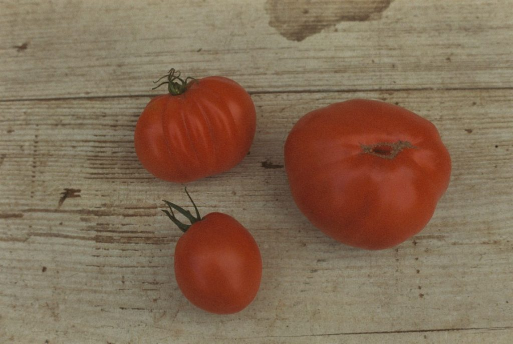 Tomate Red Pear