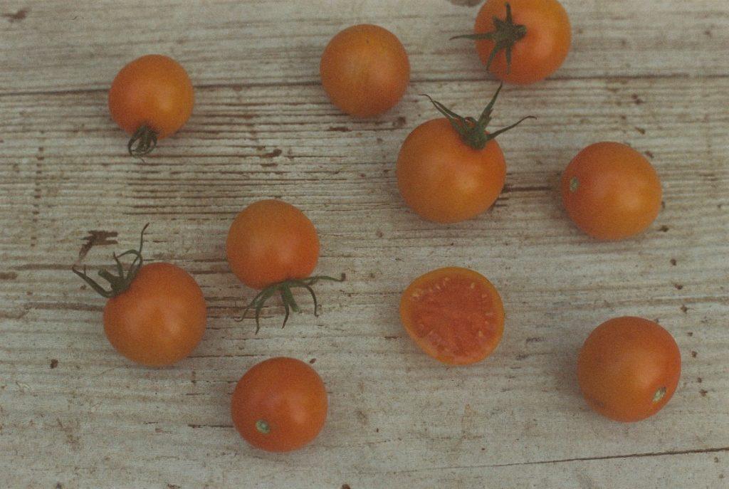 Tomate Sorte Zlatava